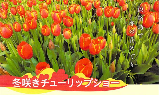 冬咲きチューリップショー