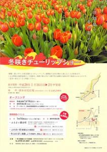 eye_tulip_003
